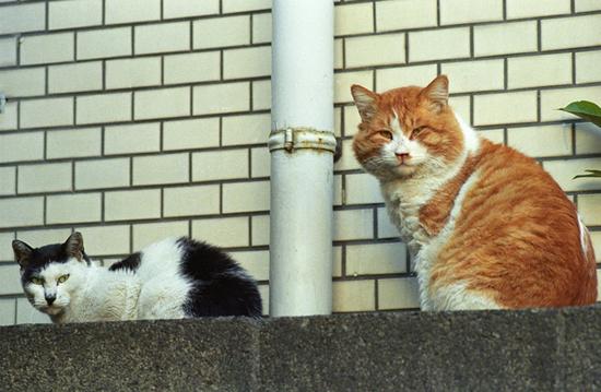 notriouscat.jpg